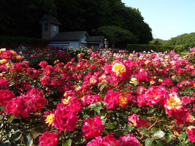 手付かずの自然が残された環境に、聞きなれない名前の花が!