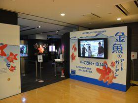 金魚好きなら見逃すな!江戸川区篠崎の「金魚アートガーデン」へ美しすぎる金魚に会いに行こう!