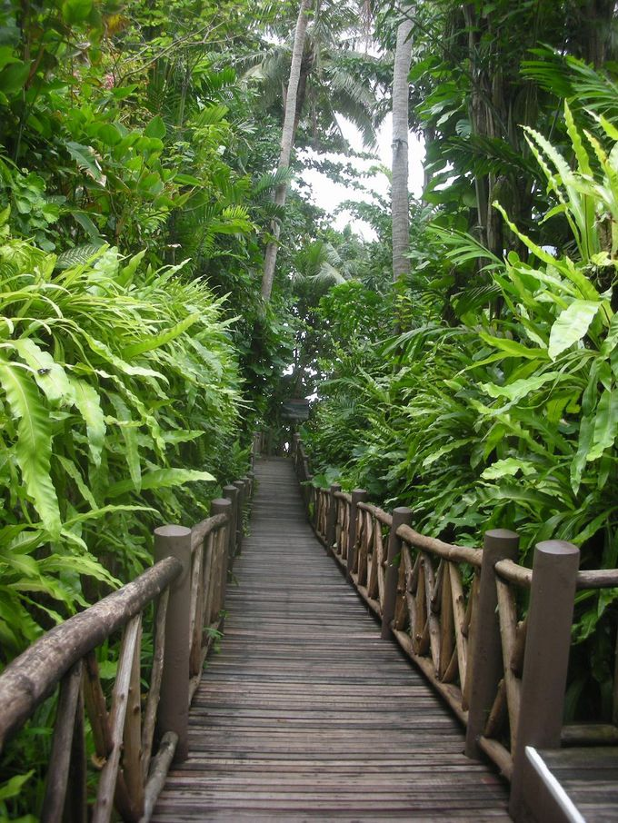 ロマンティック・レストラン「On The Rock」へはジャングルを通ってプチ冒険!