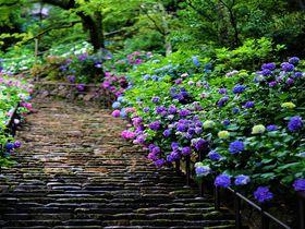 奈良の花の名所!絶景・長谷寺の回廊と本堂から見る四季の自然美