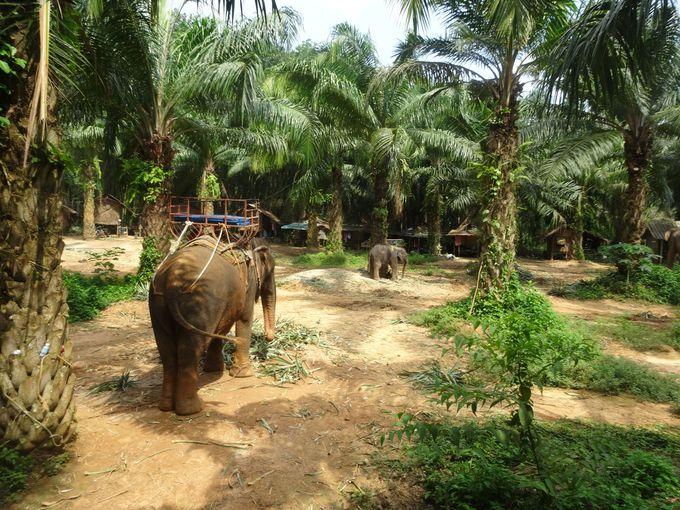 タイの人々にとって特別な存在である象。