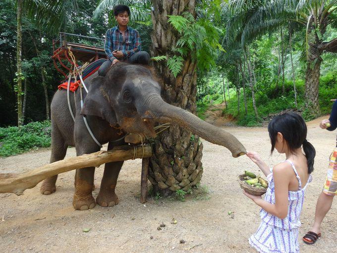 象のりの後は、ふれあいタイム
