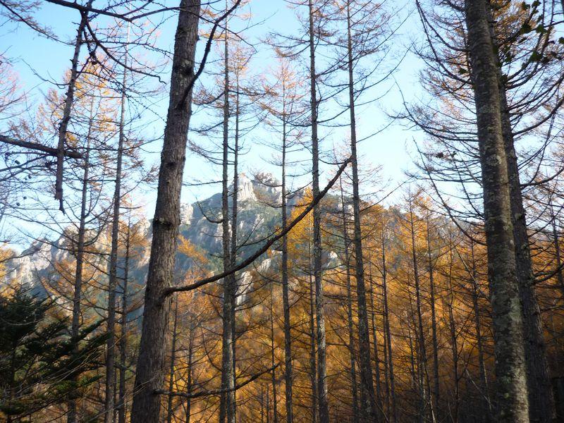 森が金色に輝く季節、山梨県 瑞牆山の頂から紅葉とパノラマの絶景を!