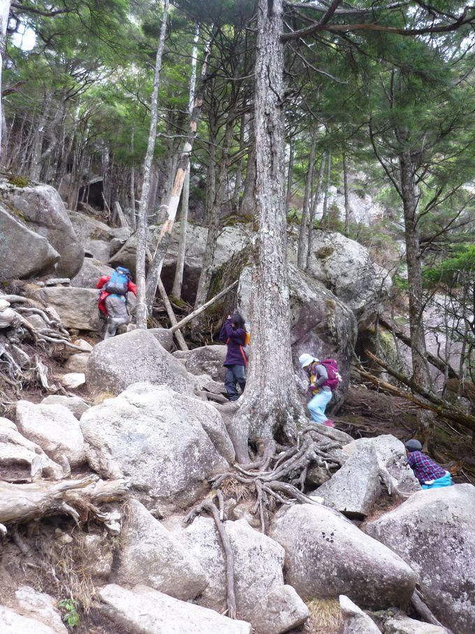本格的な登山でいざ山頂へ!