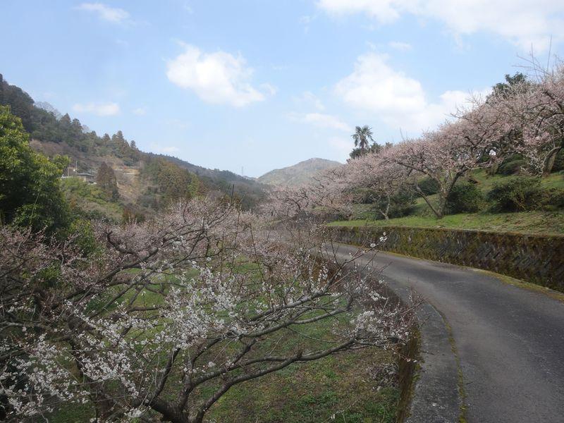 春は梅から!美しく、うんめ〜梅に出会う!四国徳島県神山町