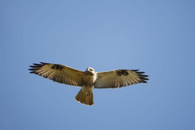 渡り鳥たちの旅立ちの場所、いざ、白樺峠へ!