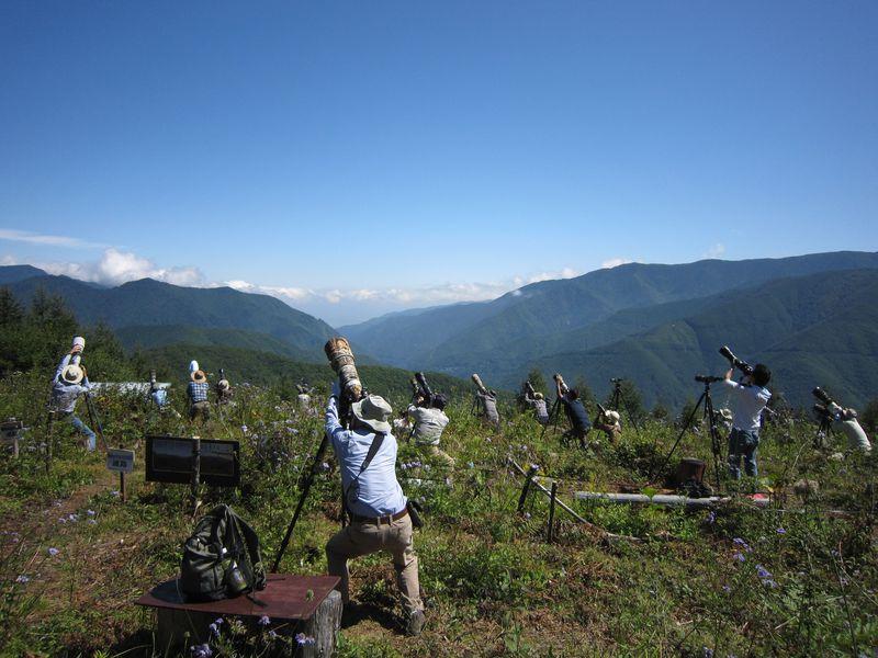 バードウォッチャーの聖地!長野県・白樺峠でタカ柱ウォッチ