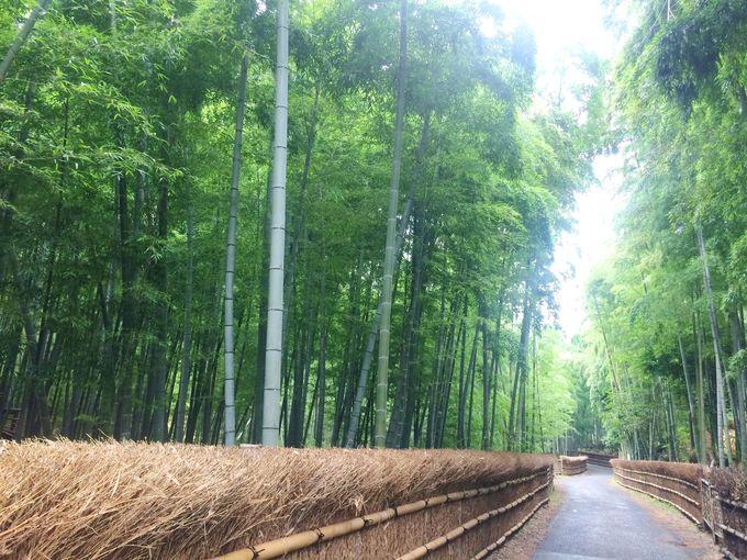 竹の里、乙訓(おとくに)を知っていますか?
