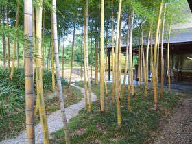 あんな竹、こんな竹!?京都・乙訓の竹林公園で竹を知る旅