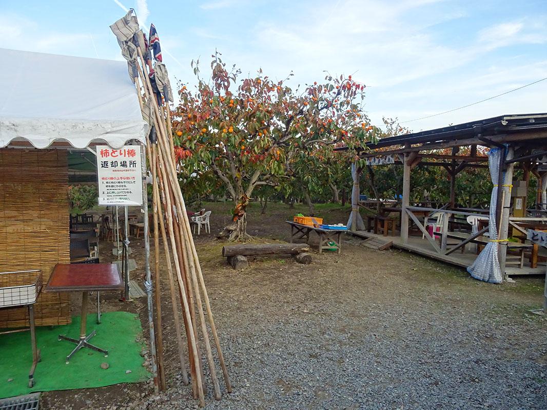千弥農園で柿狩りを楽しもう