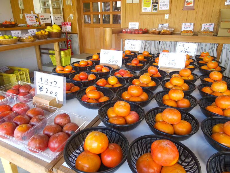 ここが京都市内!?自然広がる千弥農園へ果物狩りに行こう!