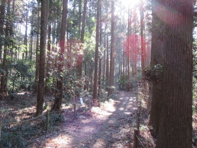 気持ちいーい!森を散策