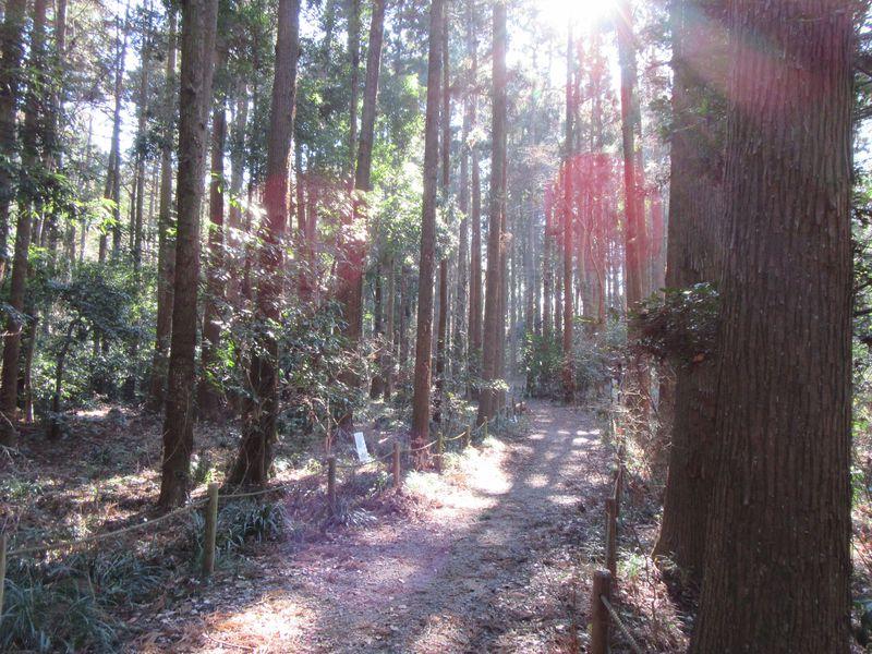 野鳥の声あふれる自然たっぷりの場所!茨城「牛久自然観察の森」
