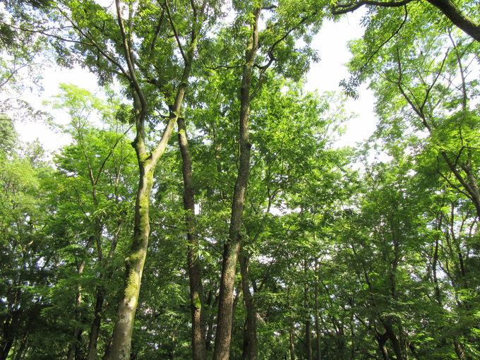 アクセス抜群のつくばの森の中に!