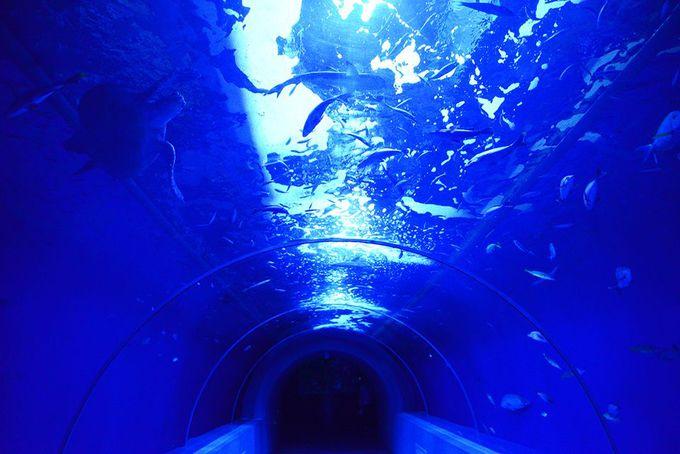 日本唯一の地下水族館!さかなクンも愛する「もぐらんぴあ」