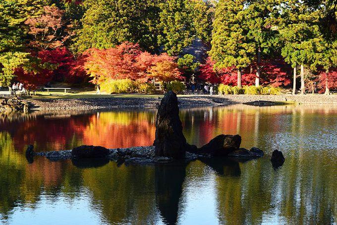 「毛越寺」の紅葉は浄土庭園をより一層引き立てる