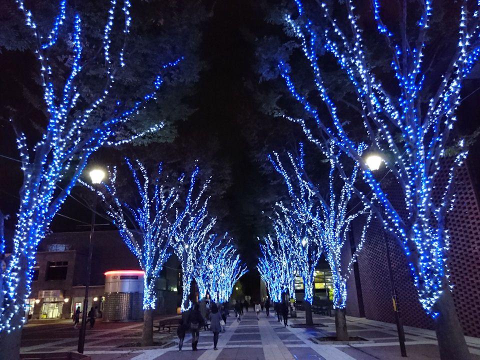 11月下旬からは「つくば光の森」が楽しめます!