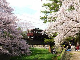 電車との競演も見過ごすな!阪神間随一の桜は西宮「夙川公園」へ!