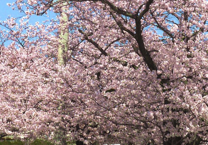 夙川公園のつぎは、火垂るの墓の舞台ニテコ池へ。