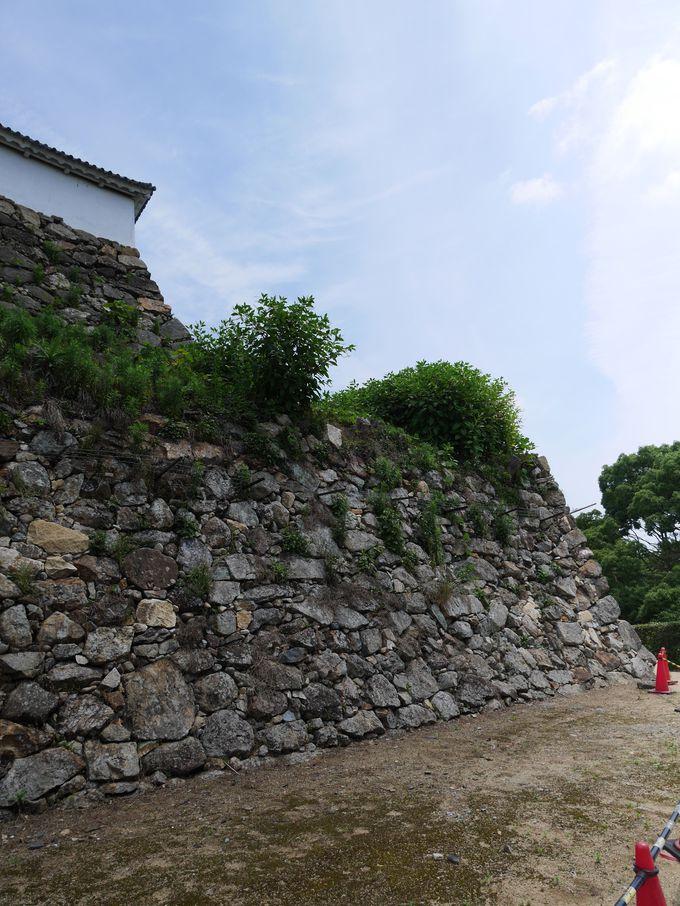 姫路城唯一の「穴太積の石垣」