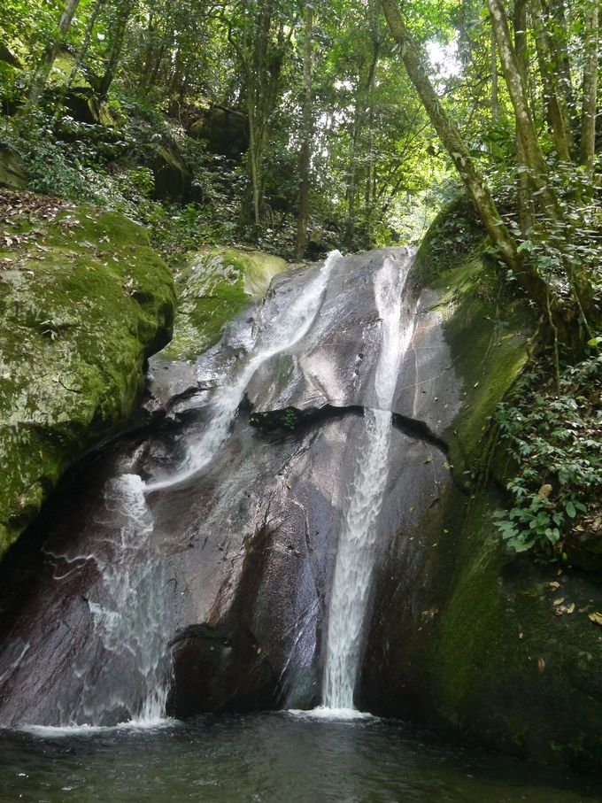 爽快!熱帯雨林のジャングルの中をトレッキング