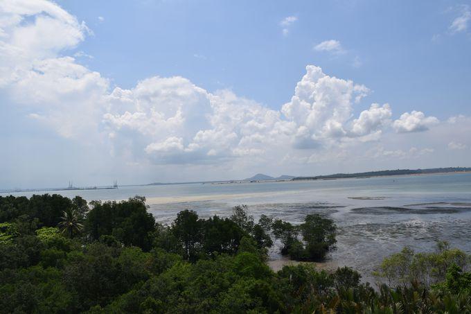 マングローブの密林を散策!まるでジャングルの世界