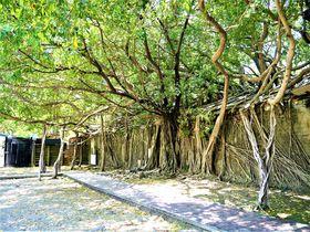 レトロ&ノスタルジック!台湾最古の街「安平」は観光もグルメも大満足