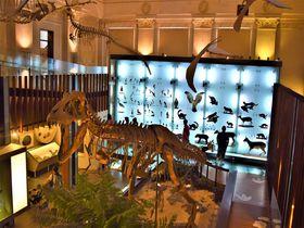 銀行と恐竜のコラボ?子供も大人も楽しめる台北「土地銀行展示館」