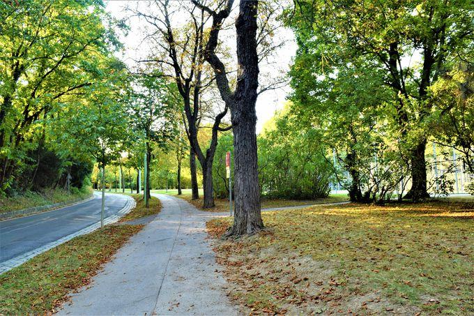 ベートーベンの散歩道で自然を感じよう!