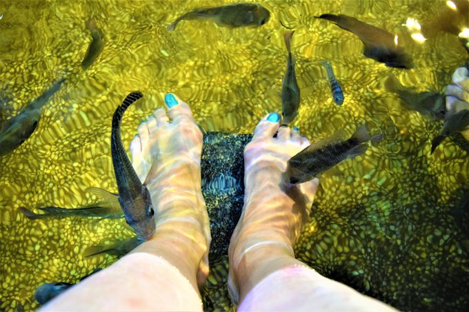 礁渓でドクターフィッシュを楽しもう!
