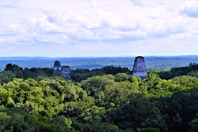 ティカル最大の見どころ!�W号神殿