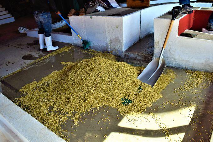 コーヒー豆の重要な「乾燥」の工程も!
