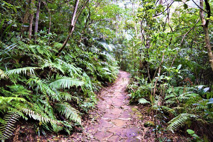 貴重な体験!ジャングルの中をトレッキング