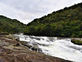 神秘的なパワーをチャージ!西表島「浦内川」でお手軽ジャングル体験