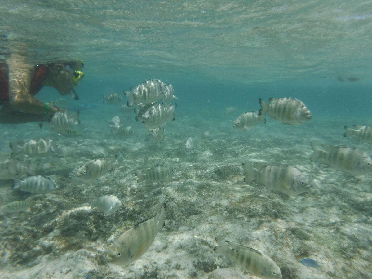 海に潜ればたくさんの魚たちに出会える