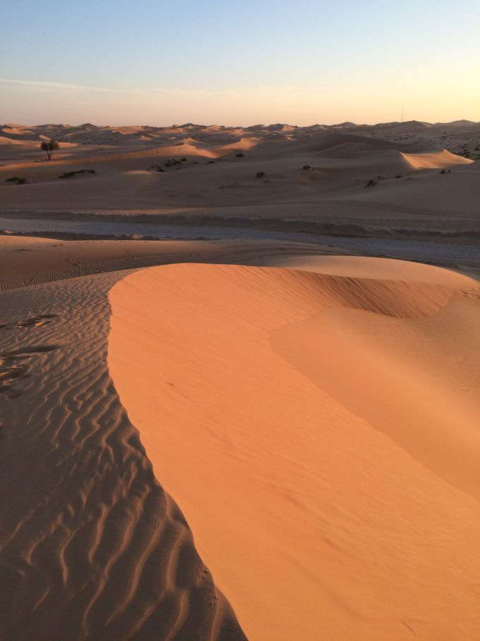 広大な砂漠ツアーと砂漠リゾート