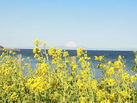 春を先取り!花いっぱいの千葉「房総フラワーライン」