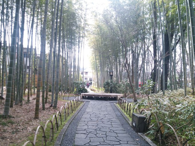 外国人に人気の竹林の小径