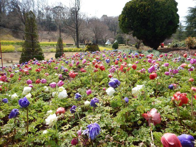 広い園内に季節ごとの花々がいっぱい