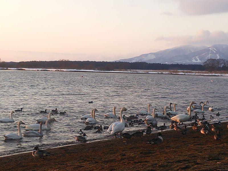 冬に訪れたい福島の観光スポット8選 雪の会津や温泉も