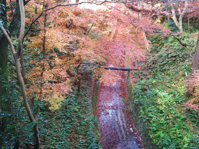 紅葉で人気の京都・東福寺!通天橋以外にも注目、渓谷・洗玉澗に架かる三名橋の絶景