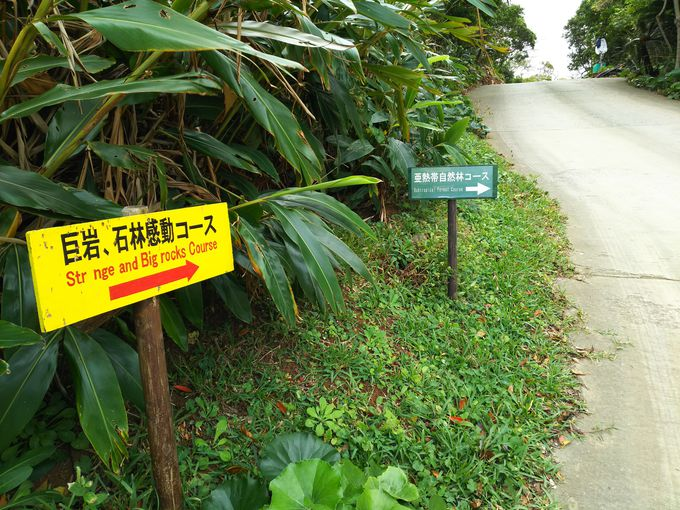 沖縄の聖地である安須杜に踏み入れる「大石林山」