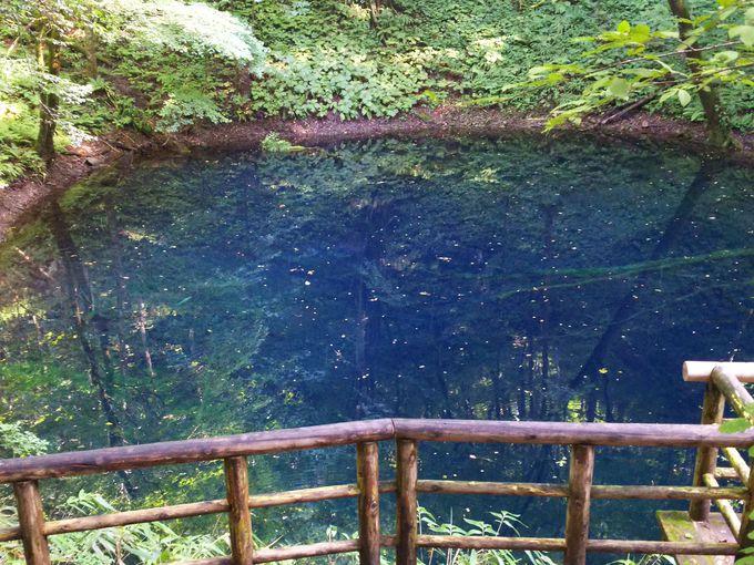コバルトブルーの青池へ