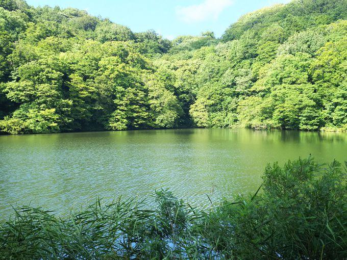 十二湖・青池へのアプローチ