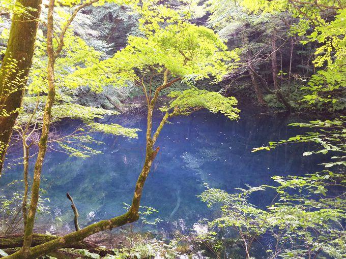 5.沸壺の池