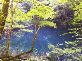 世界遺産 白神山地の十二湖で森林セラピーを楽しもう!