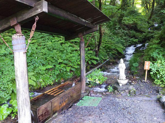 ブナ林を歩いた先、穴場の沸壺の池へ