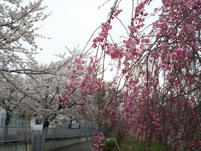 旧国鉄日中線の線路跡の遊歩道