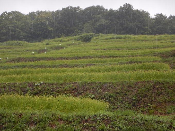 ぜひ訪れたい、世界農業遺産・米どころ佐渡の「棚田」