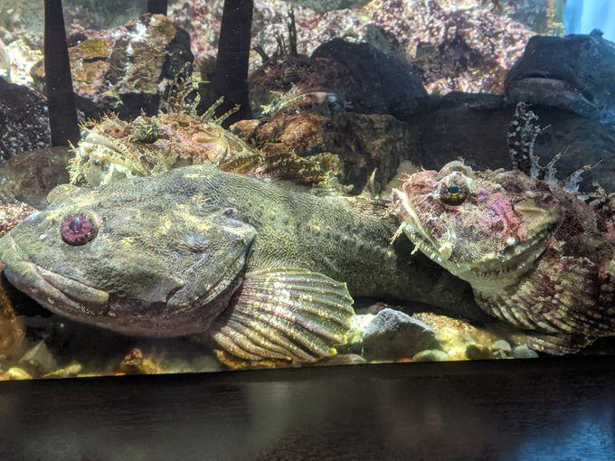 水槽で人気のお魚たち